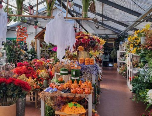 Halloween: fiori e idee regalo