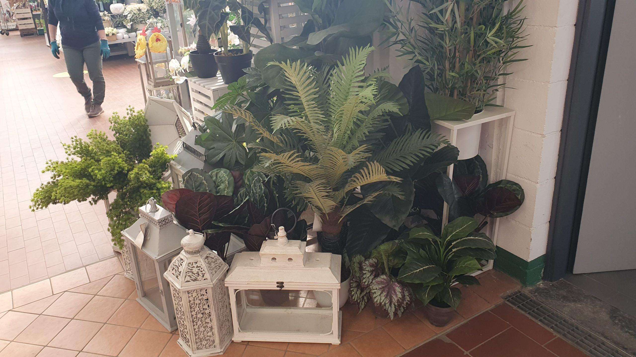 vendita semi e piante per interno
