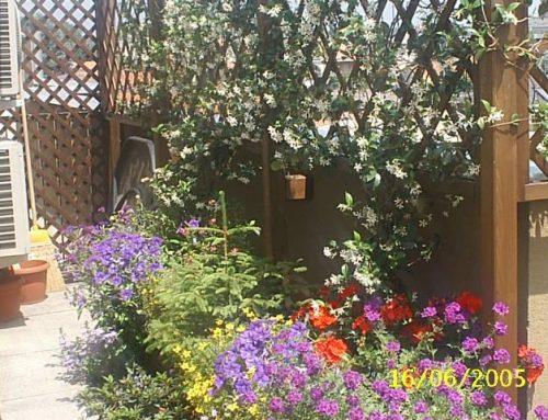 servizio di Landscape designer o garden designer