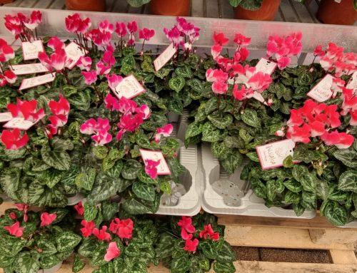 fiori per la festa dei morti